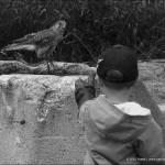 Děti s dravci (09)
