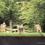 Fotky dravců (30)